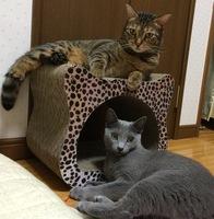 ネコ背にも骨盤矯正!